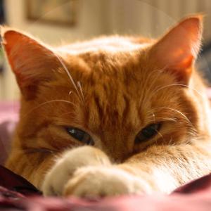 gato_cama-BLOG_LIDERVET
