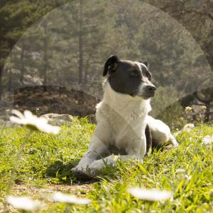 perro_campo-BLOG_LIDERVET