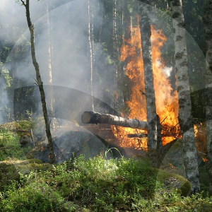 incendio-BLOG_LIDERVET