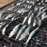 sardinas-BLOG_LIDERVET
