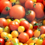 tomate-BLOG_LIDERVET