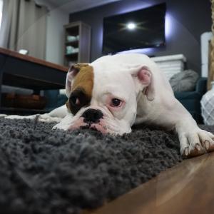 perro-casa-BLOG_LIDERVET