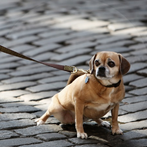 perro-necesidades-BLOG_LIDERVET