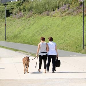 perro-paseo-BLOG_LIDERVET
