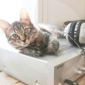 gato-casa-blog_lidervet