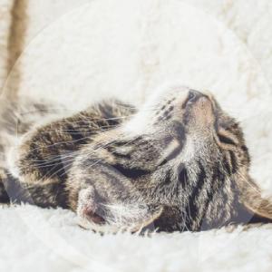 gato-dormir-blog_lidervet