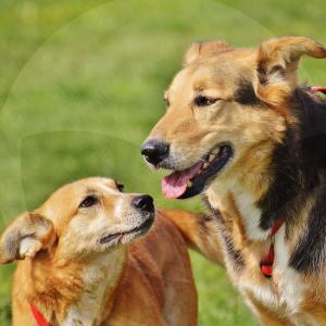 perros-blog_lidervet