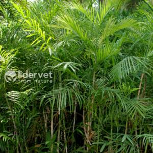 blog-palmera_bambu